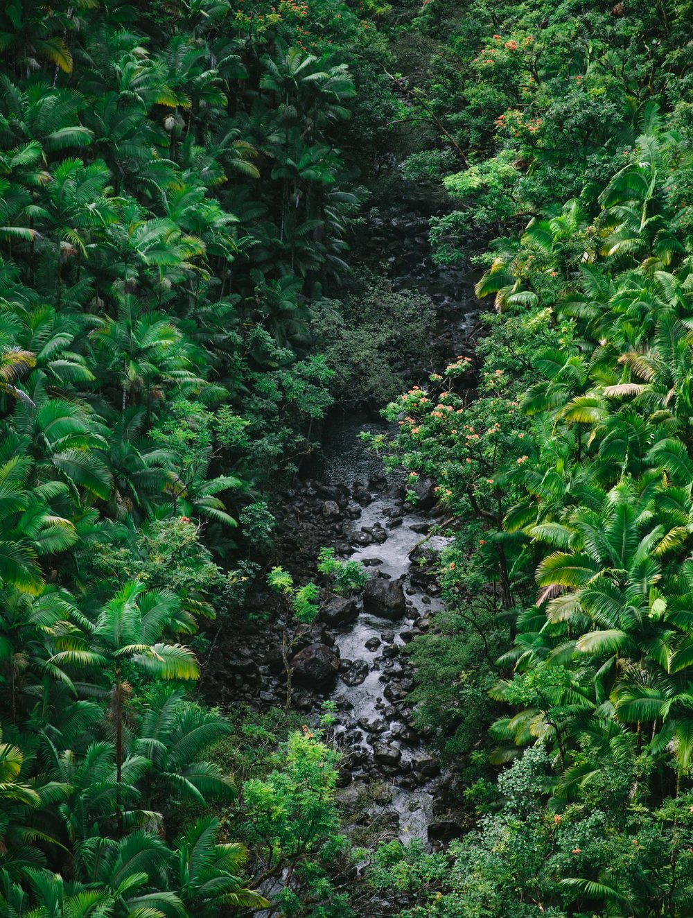 Hawaii-Big-Island-Travel-Guide-by-Eva-Kosmas-Flores-42-1360x1800.jpg