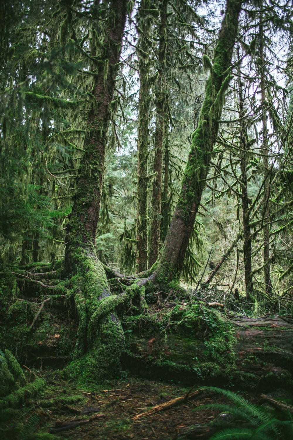 Olympic-National-Park-by-Eva-Kosmas-Flores-38-1-768x1152@2x.jpg