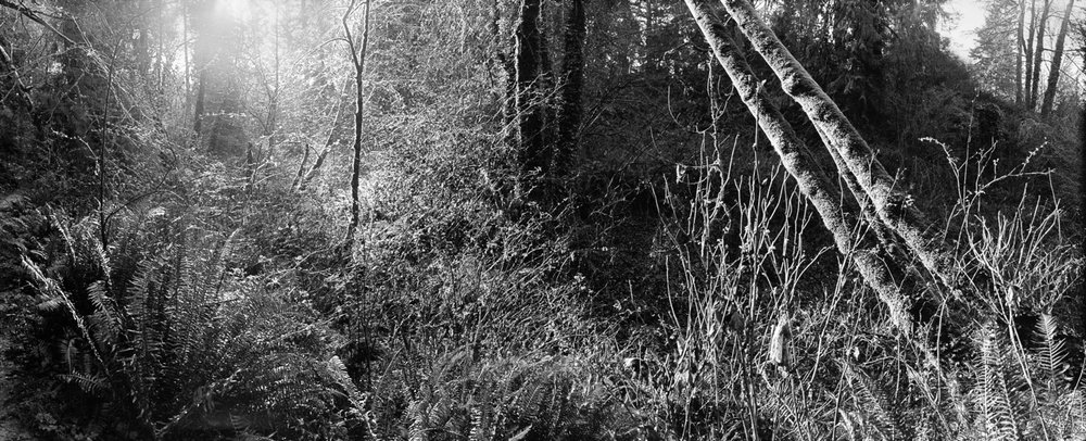 Tryforos_gig harbor woods 1.jpeg