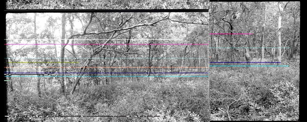 Tryforos_wellfleet woods1.21-22 colorflipbroken.jpeg