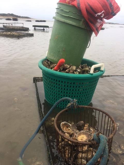 Weisman_Aquaculture.JPG
