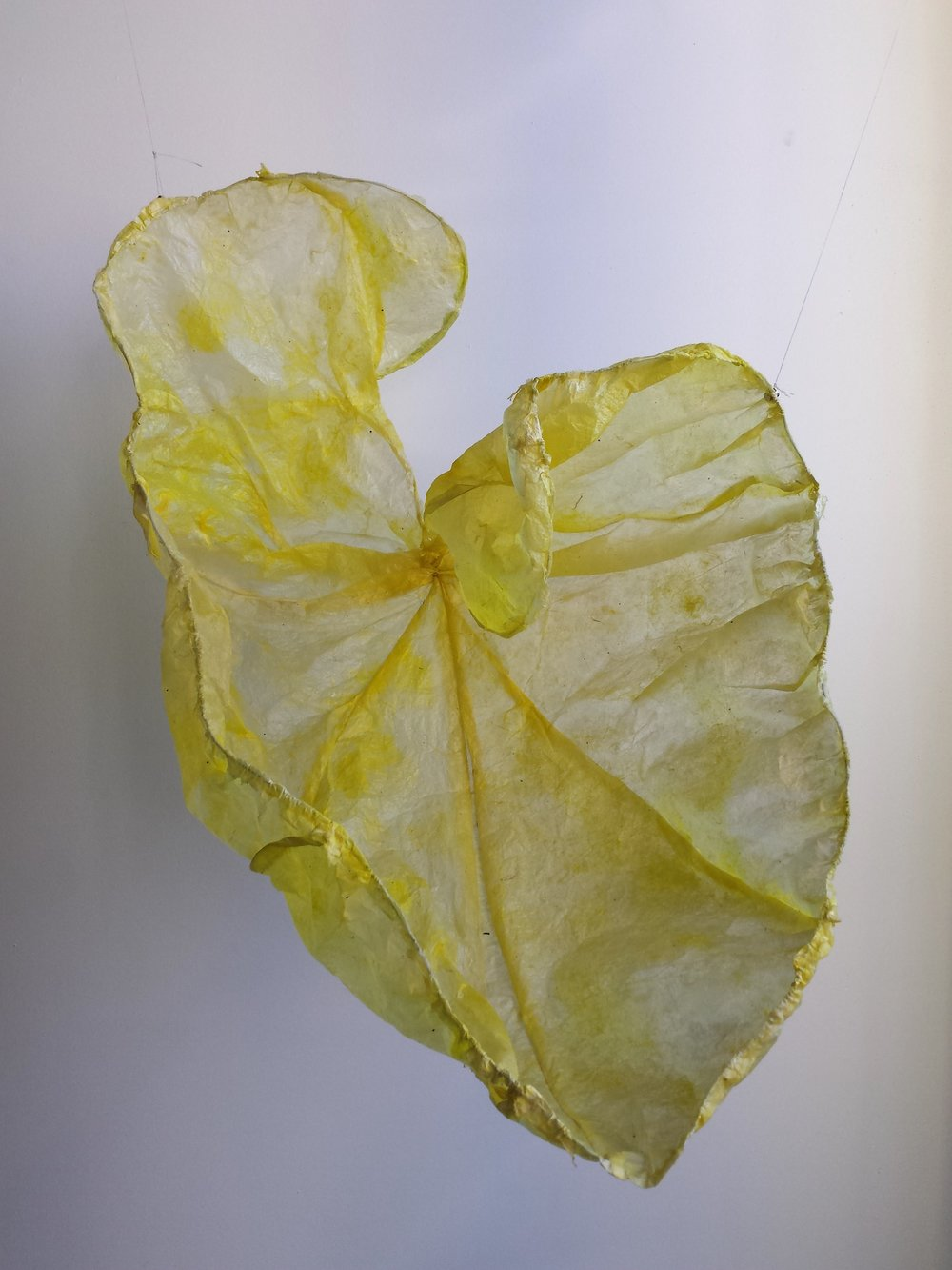 Yellow Leaf,  Sheryl Jaffe
