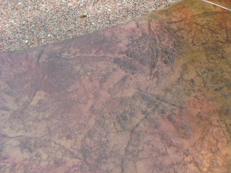 Stamped Concrete with Texture Mat
