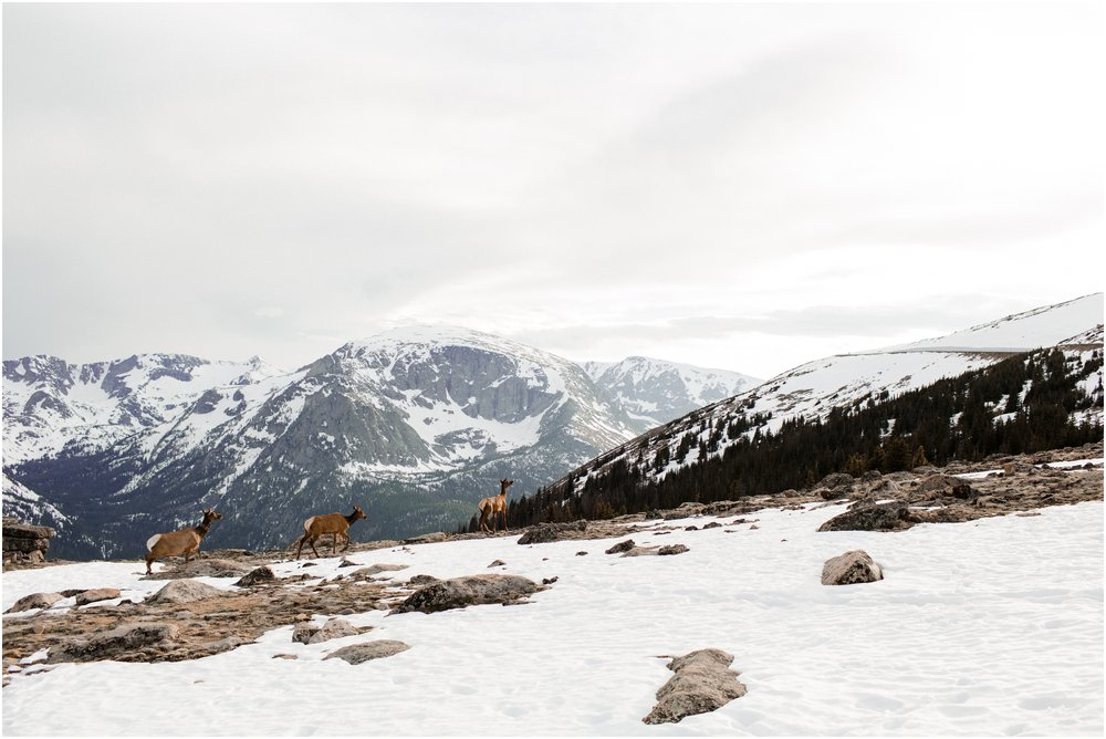 Jessica_Daniel_Colorado_adventure_engagement_session_rocky_mountain_national_park_trail_ridge_road__0054.jpg