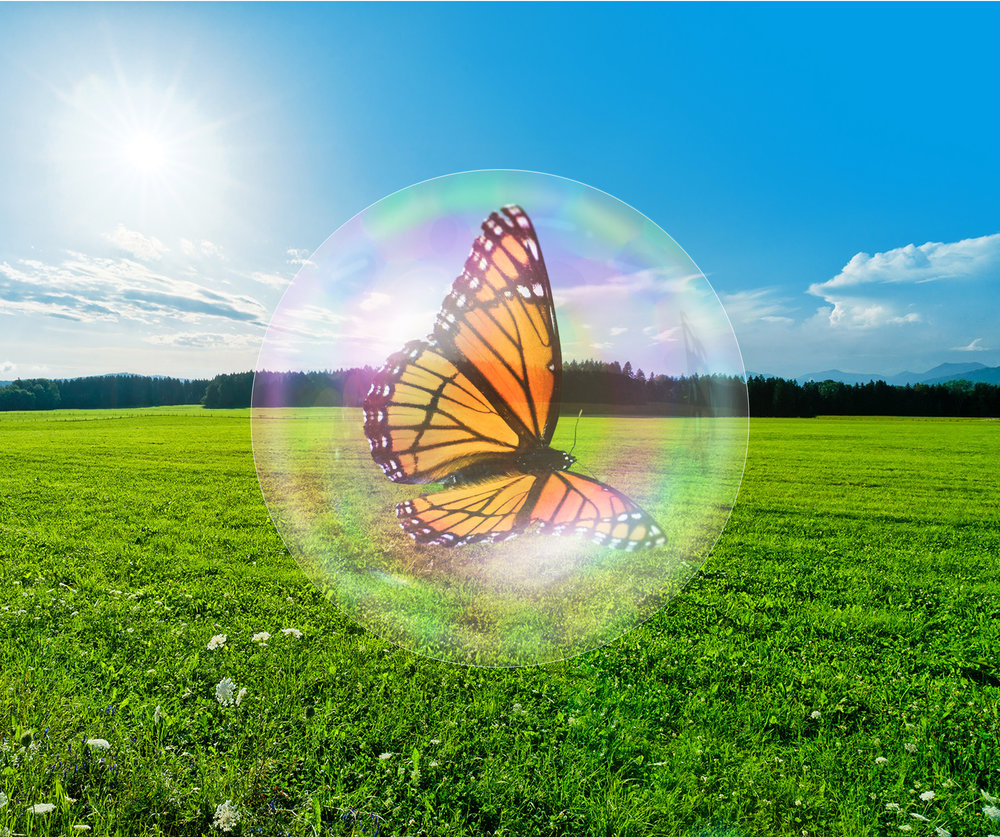 Butterfly image inserted into bubble.