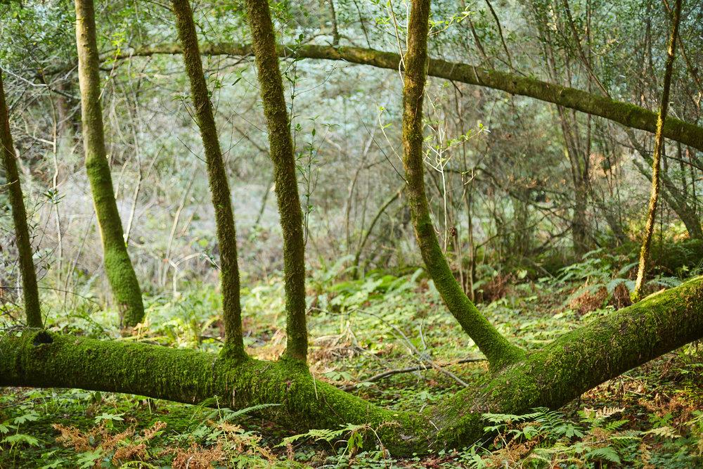 sophia-liu-photography-muir-woods-IMG_7926x1500.jpg