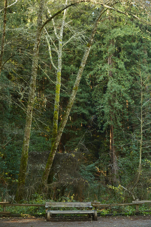 sophia-liu-photography-muir-woods-IMG_7851x1500.jpg