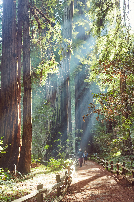 sophia-liu-photography-muir-woods-IMG_8156x1500.jpg