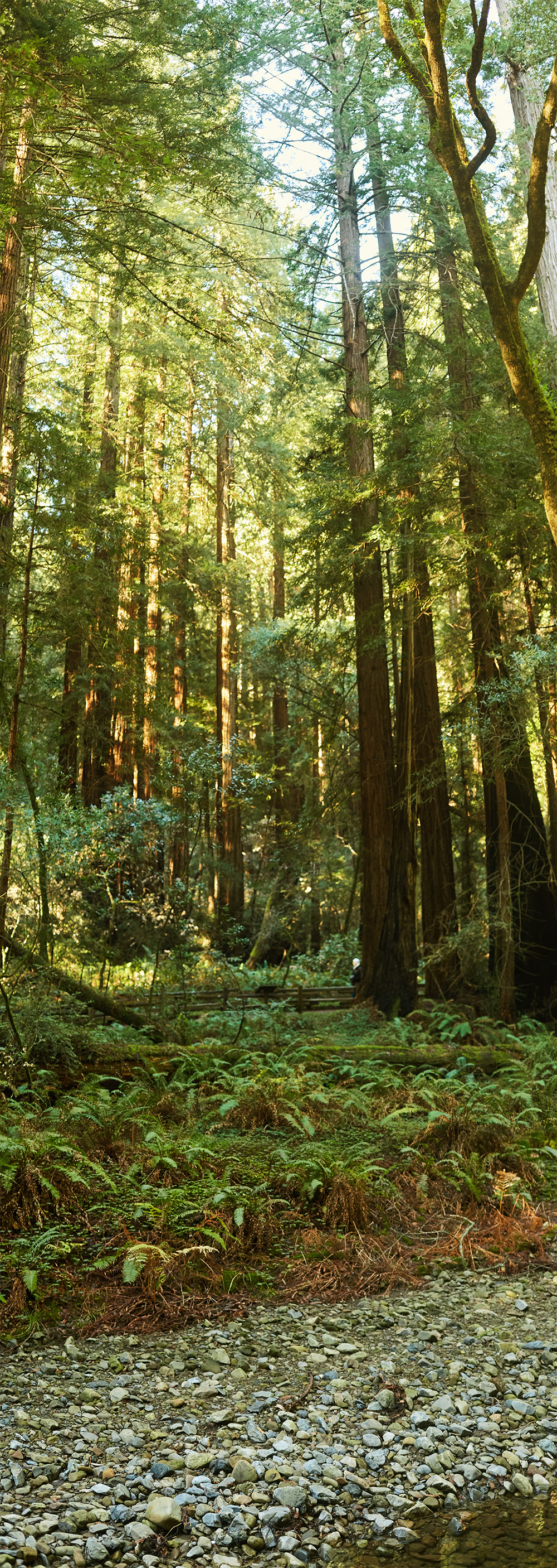 sophia-liu-photography-muir-woods