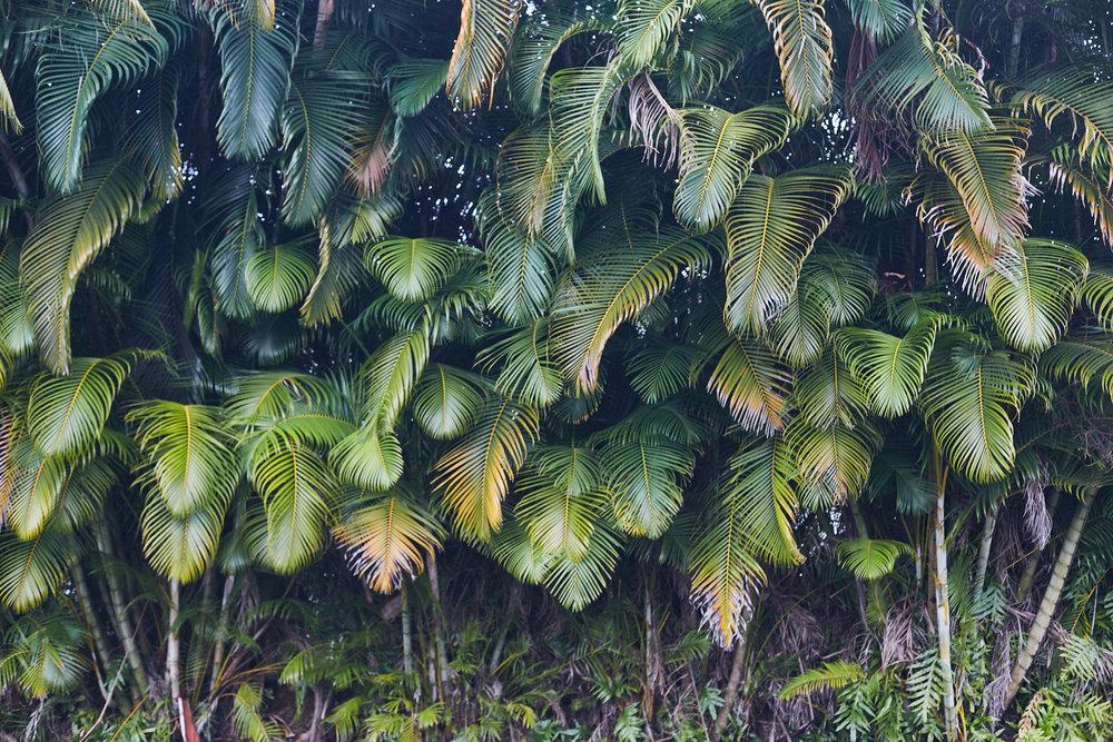 studio-sophy-hawaii-sophia-liu-photography-IMG_1032x1600.jpg