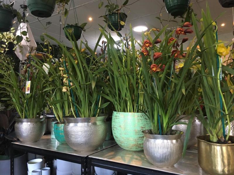Orchid-pots.jpg