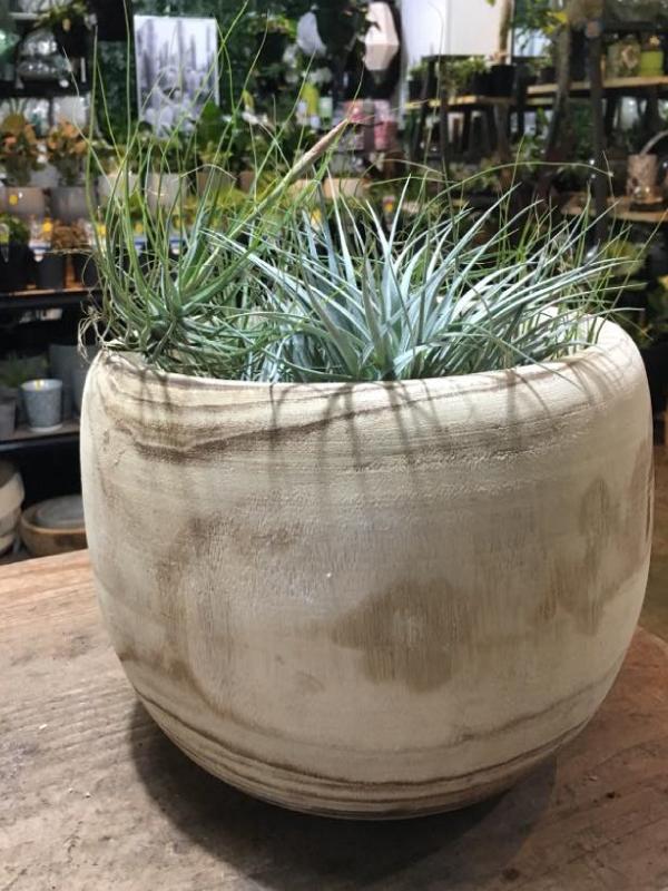 timber-pot.jpg