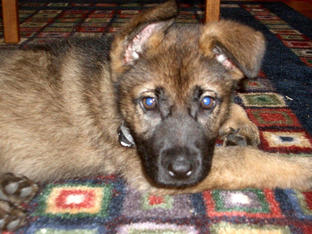 Puppy Pacey