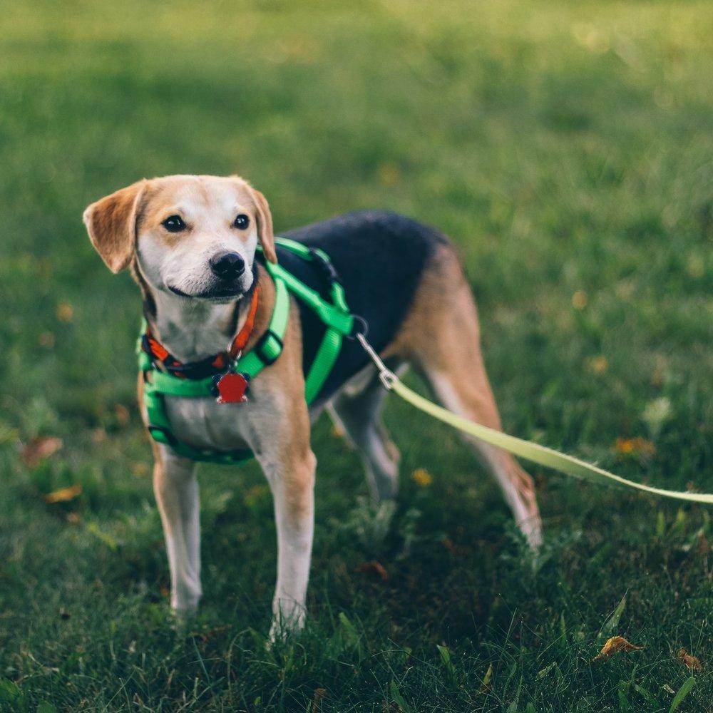 Dog Training Classes Napa Valley