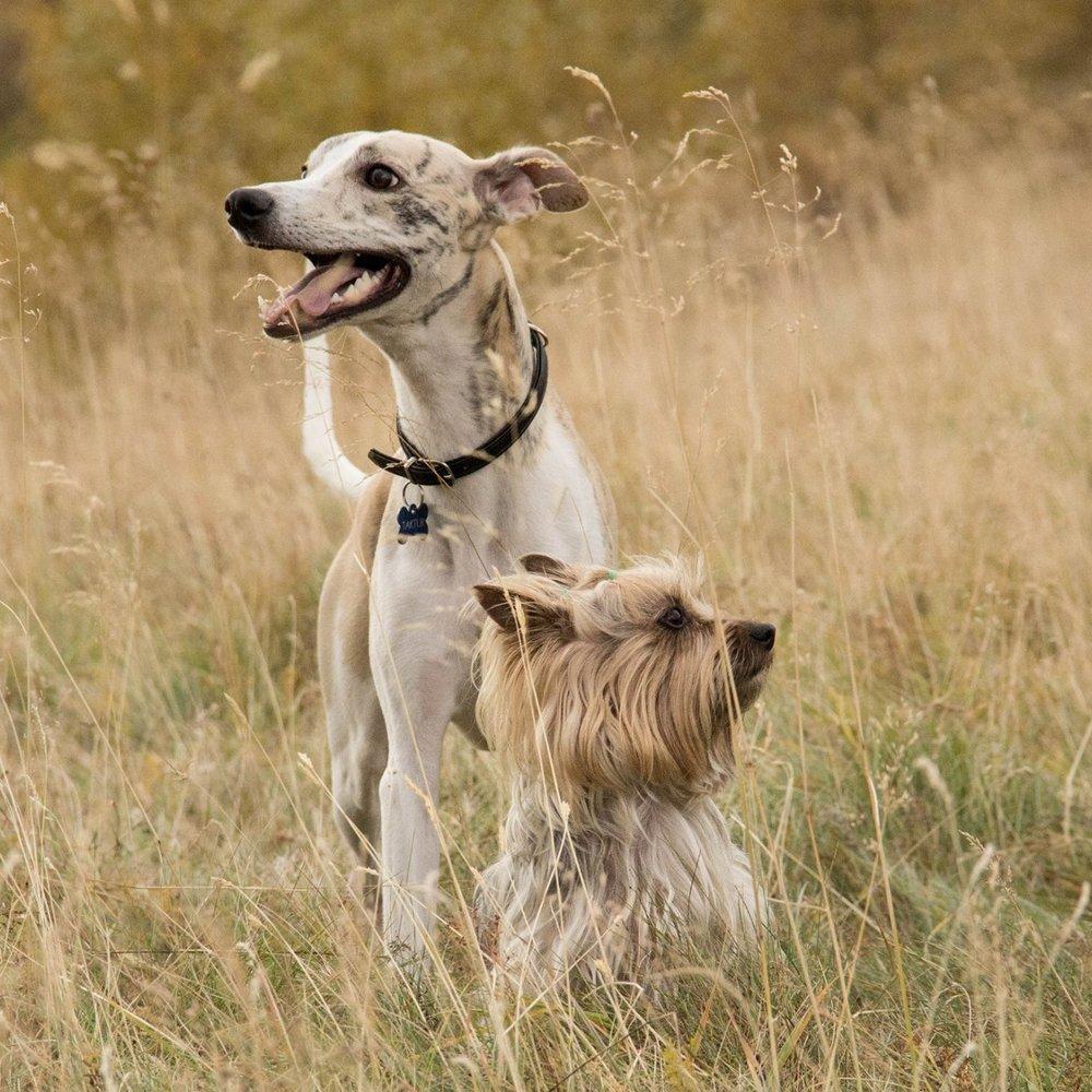 Dog Training Napa Valley