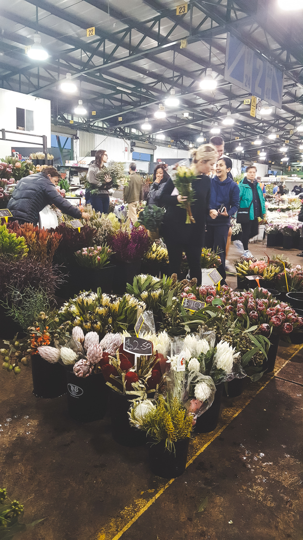A Guide To The Sydney Flower Market At Flemington Lime Tree Bower