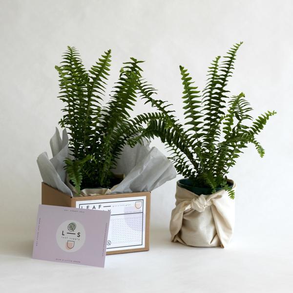 Photo via Leaf Supply
