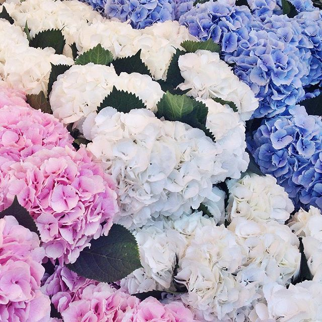 instagram_sarah_blythe_flowers
