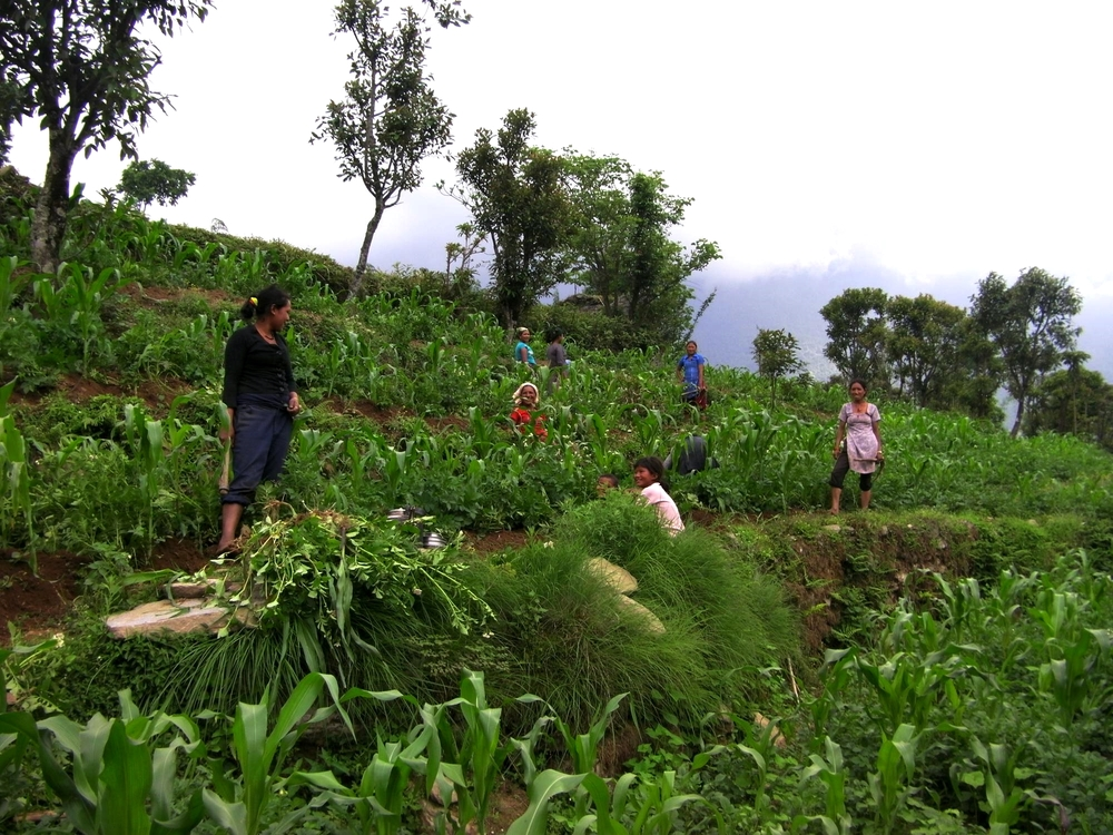 Women working in the field near Bumburi