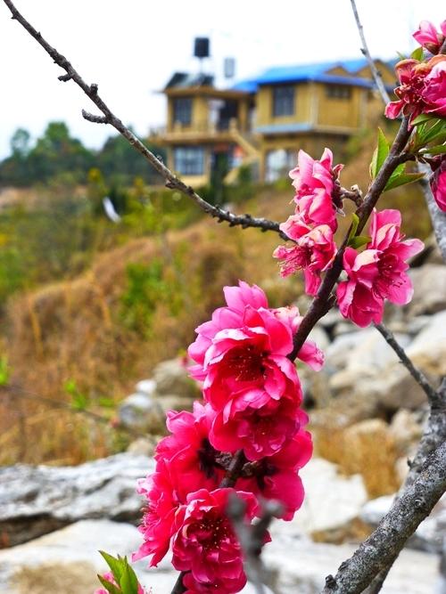 Flowers_Farm_Adventure_Alternative_Nepal.jpg