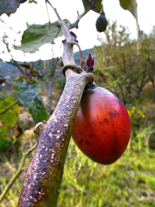 Organic_Fruit_Adventure_Alternative_Nepal.jpg