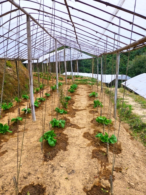 Organic_Salad_Nagarkot_Adventure_Alternative_Nepal.jpg
