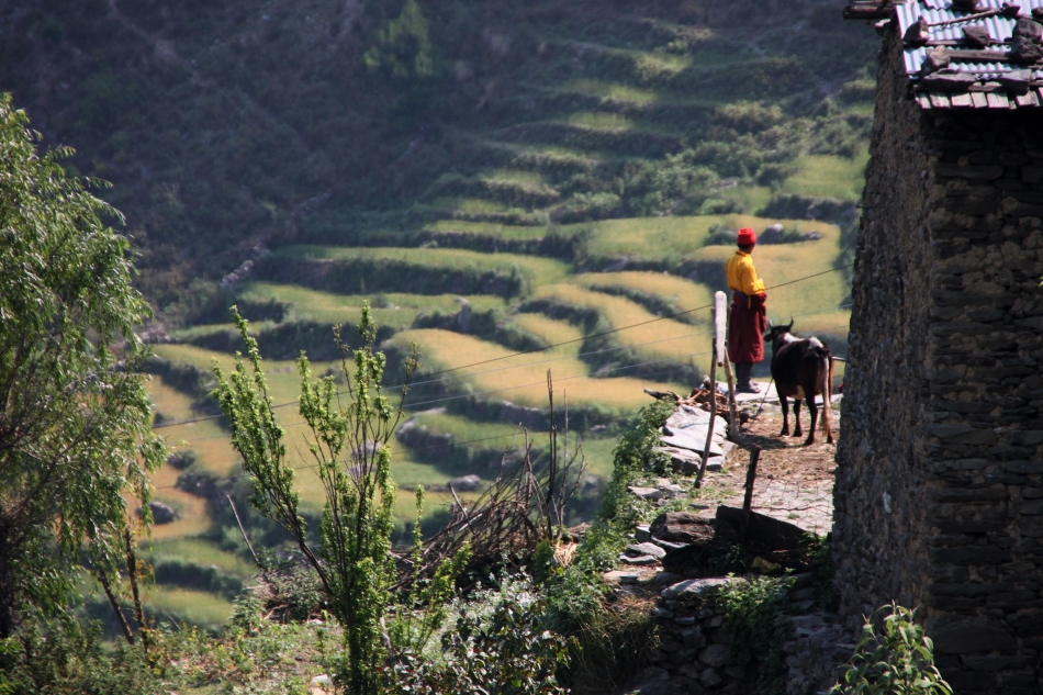 Beautiful rice fields in the background - Langtang Valley Trek