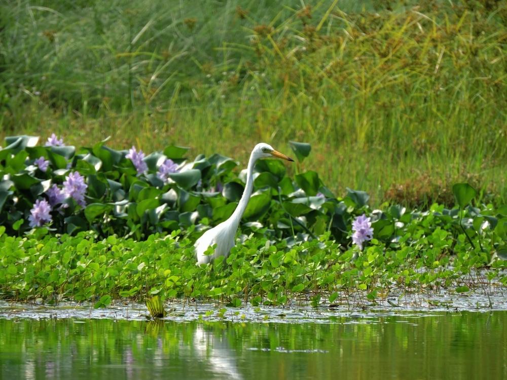 chitwan-bird2.jpg