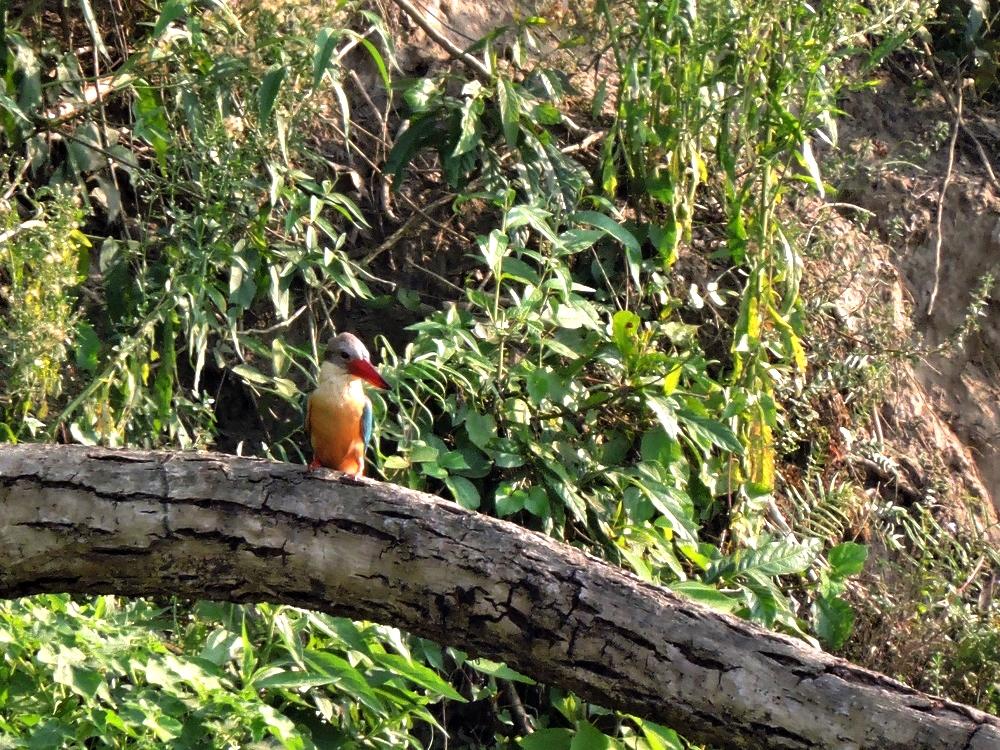 chitwan-bird1.jpg