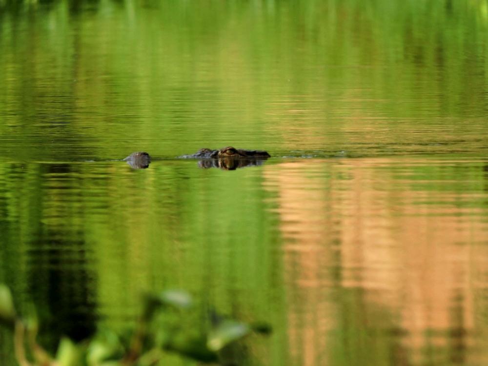 chitwan-croco.jpg