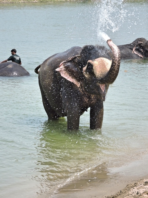 chitwan-elephant.jpg