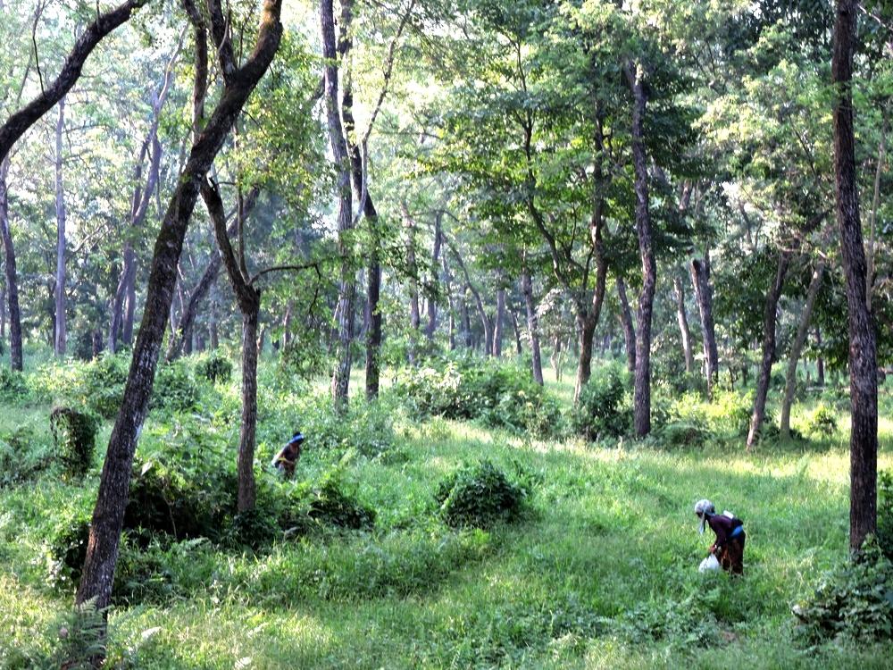 chitwan-nature3.jpg