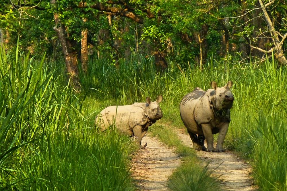 chitwan-rhinos2.jpg