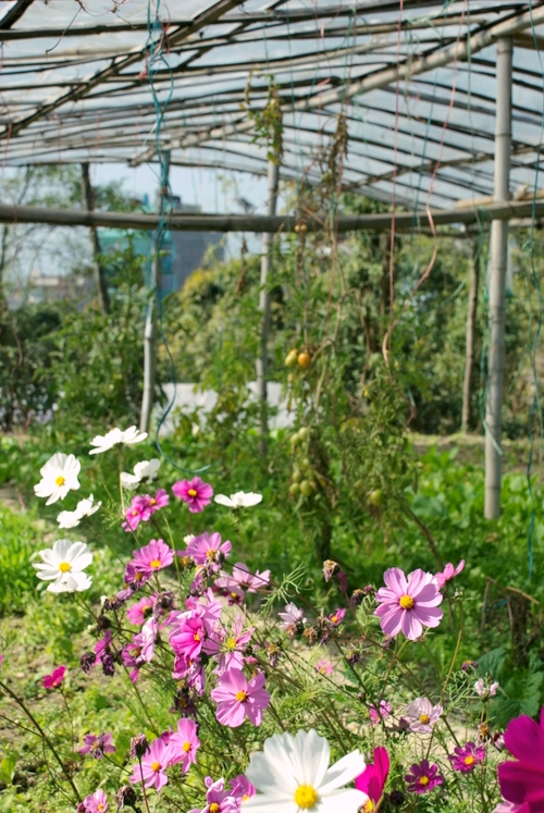 Flowers_Kathmandu_Organic_Farm_Adventure_Alternative_Nepal.jpg
