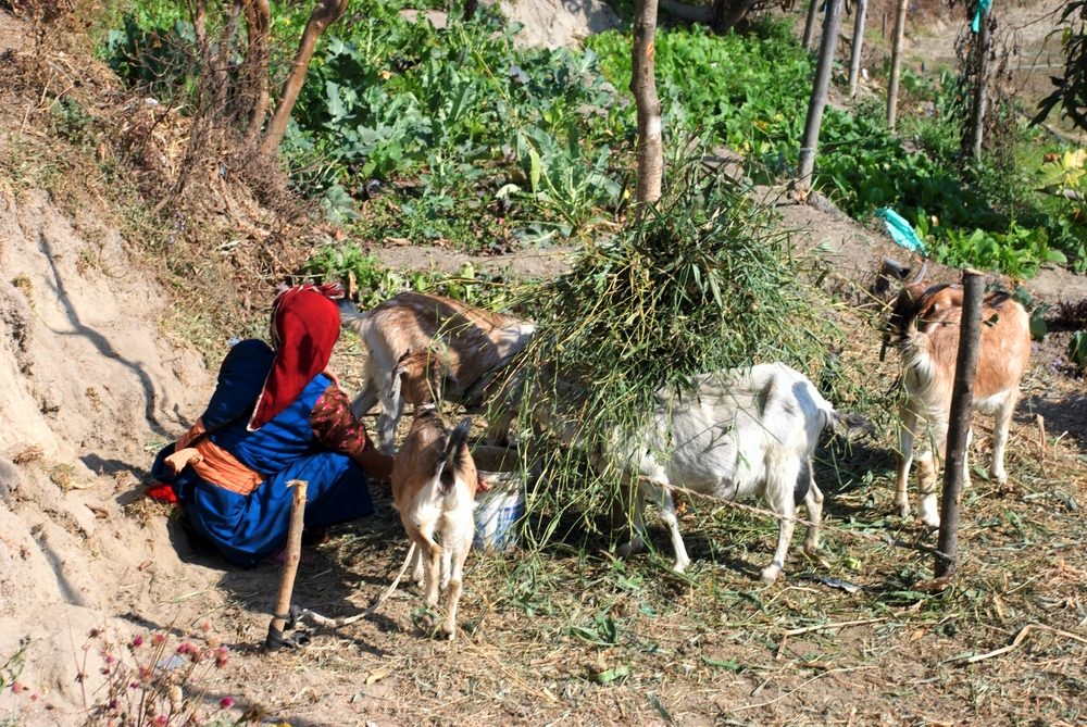 Nepali_Woman_Farming_Adventure_Alternative_Nepal.jpg