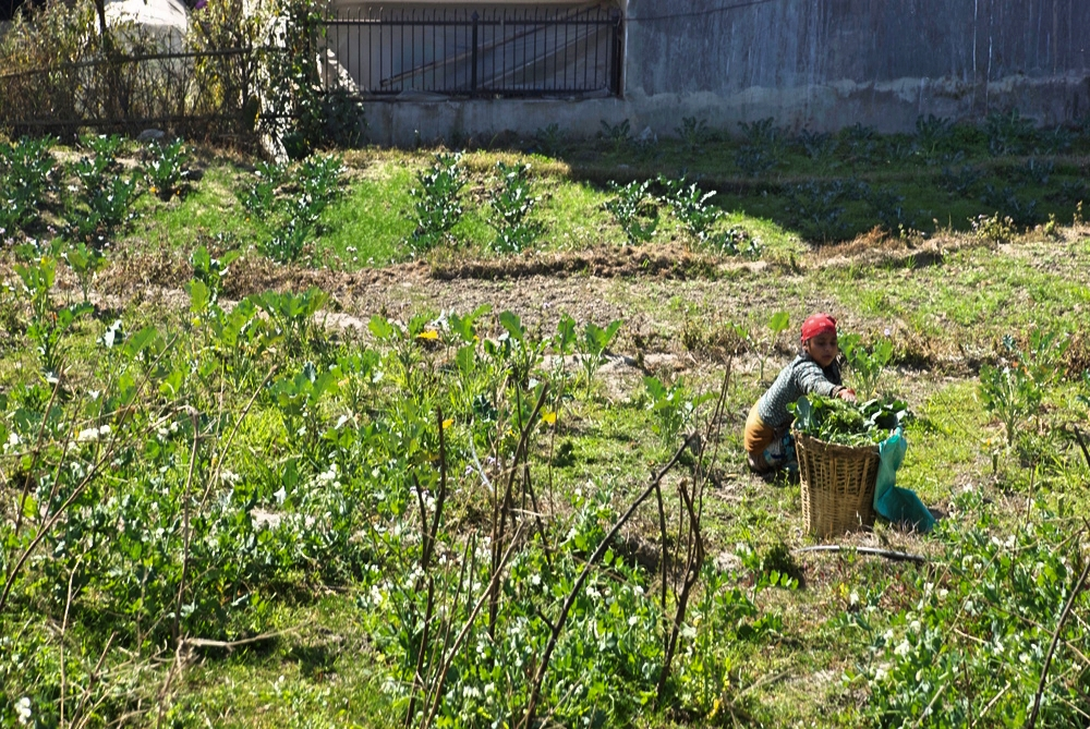 Organic_Farm_Garden_Kathmandu_Women_Adventure_Alternative_Nepal.jpg