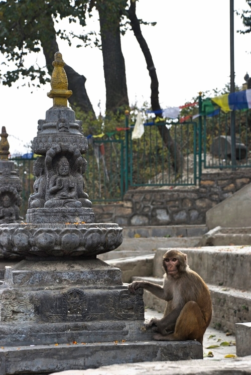 Monkey_Swayambhunath_Temple_Adventure_Alternative_Nepal.jpg