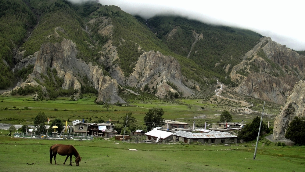 Horses2_Manang_Horse_Festival_Adventure_Alternative_Nepal.jpg