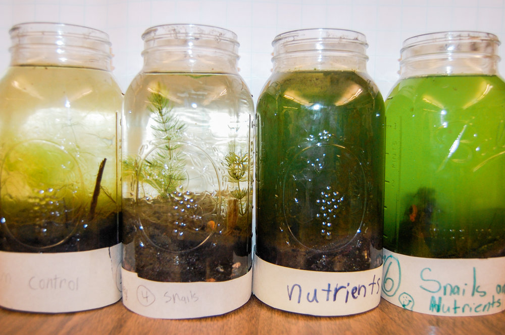 The multi-week curriculum uses the scientific method to explore the impacts of fertilizer and invasive species on pond ecosystems. The impacts are clear and measurable!