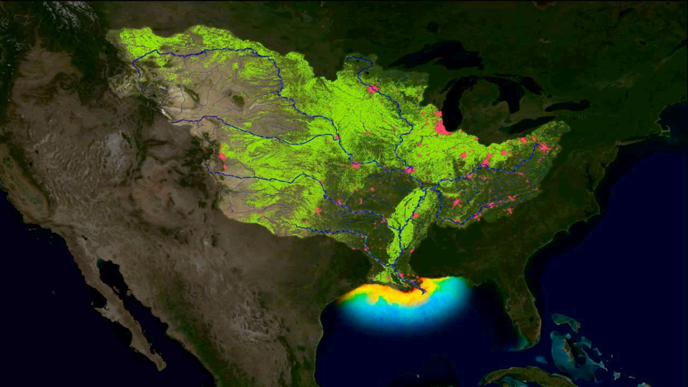 This problem happens over enormous  landscapes. Every year, the Gulf of Mexico turns into a vast dead zone as all of the fertilizer from the Mississippi watershed drains into the sea.