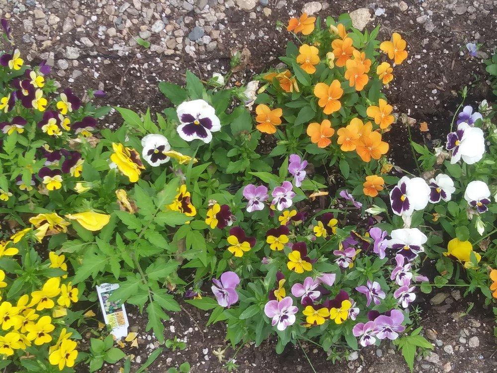 flowers in garden.jpg