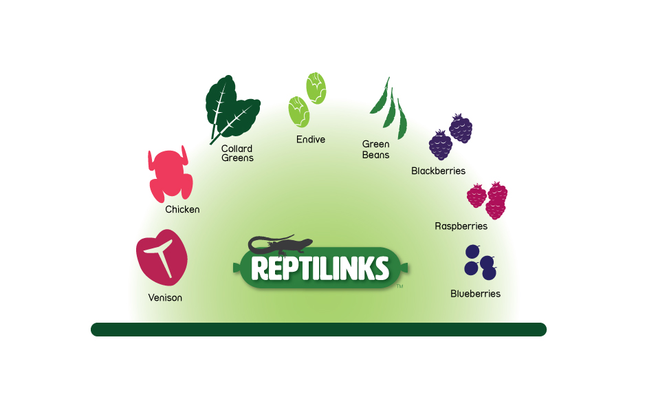 Reptilinks-Color-Elements-3 copy.jpg