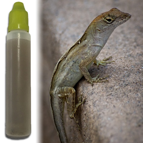 anole_scent