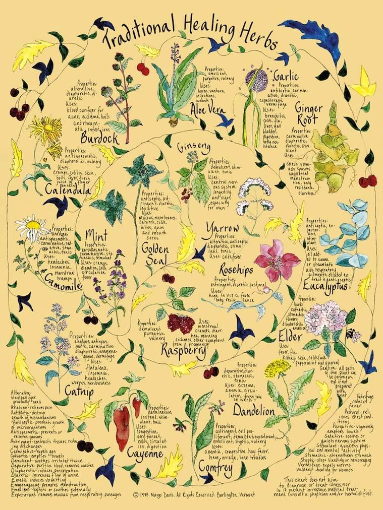 Healing_Herbs.jpg 175kb.jpg