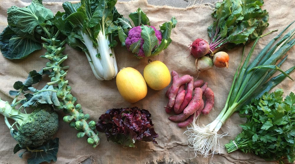 EARLY WINTER SHARE SIGNUP - 5 weeks | 9 to 11 vegetables per week | $195-$200SCROLL DOWN TO ADD FRUIT, CHEESE, CIDER & SOUP TO YOUR CART