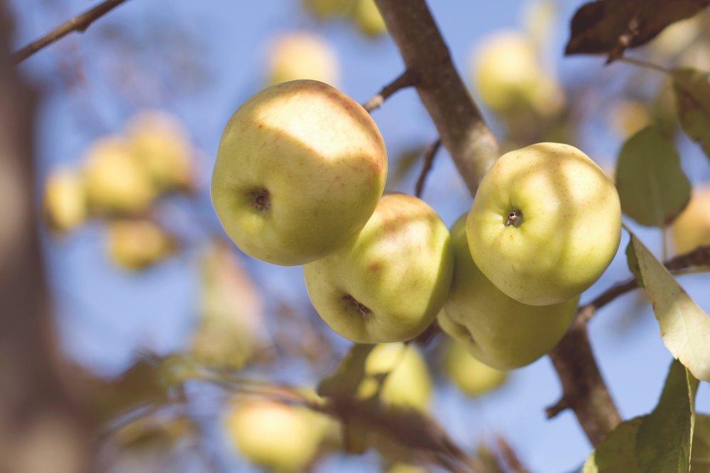 FRUITSHARE - $150 | 18 weeks3lb bag tree fruit or 1 pint berries per weekFrom Briermere Farms