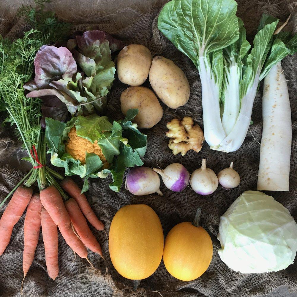 WEEK 4:  1 head Green Cabbage, 1 head Cauliflower, 1 Daikon Radish, 1 bunch Lettuce, 1 bunch Carrots, 1 lb Turnips, 1 head Bok Choy, 1 piece Ginger, 2 heads Spaghetti Squash, 2 lbs Potatoes (Retail Value: $49 , Customer Paid $40)