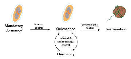 Schematic of the internal and environmental factors regulating cyst germination.