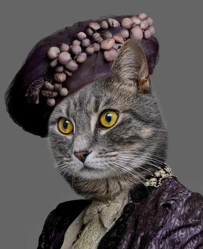 countesscat.jpg