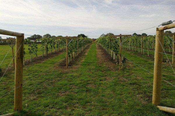 Lovels Wine (4).png